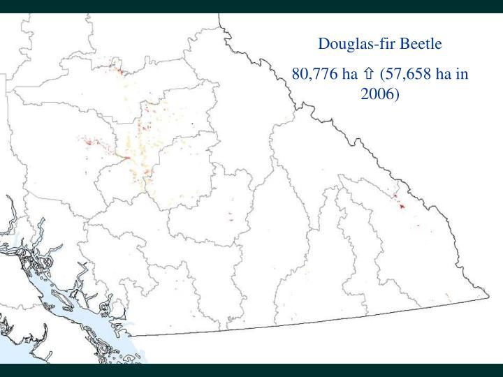 Douglas-fir Beetle