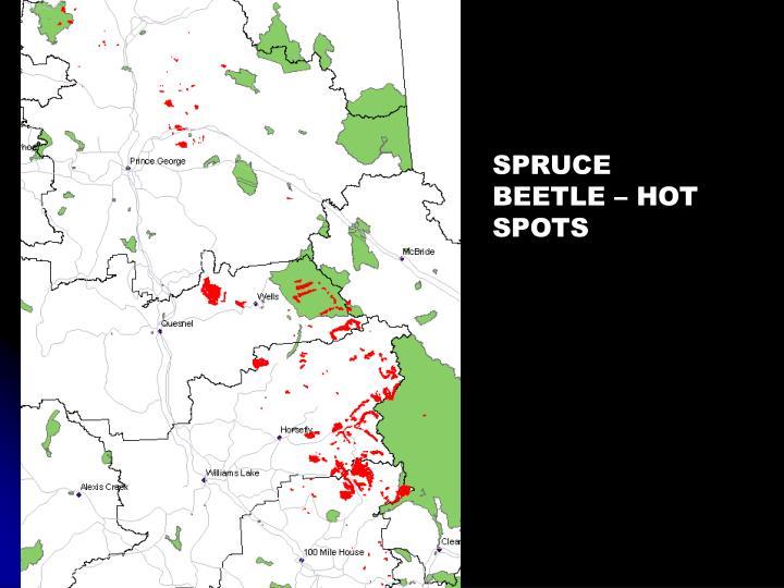 SPRUCE BEETLE – HOT SPOTS