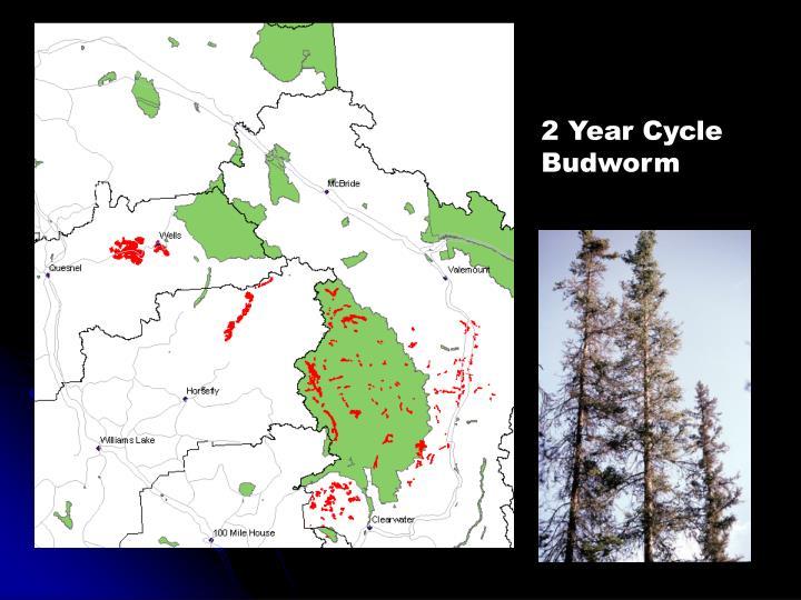 2 Year Cycle Budworm