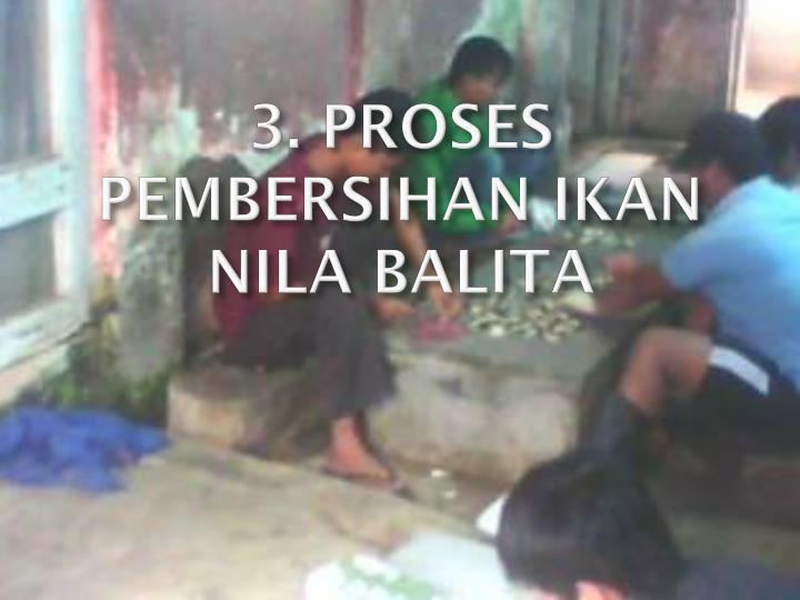 3. PROSES PEMBERSIHAN IKAN NILA BALITA