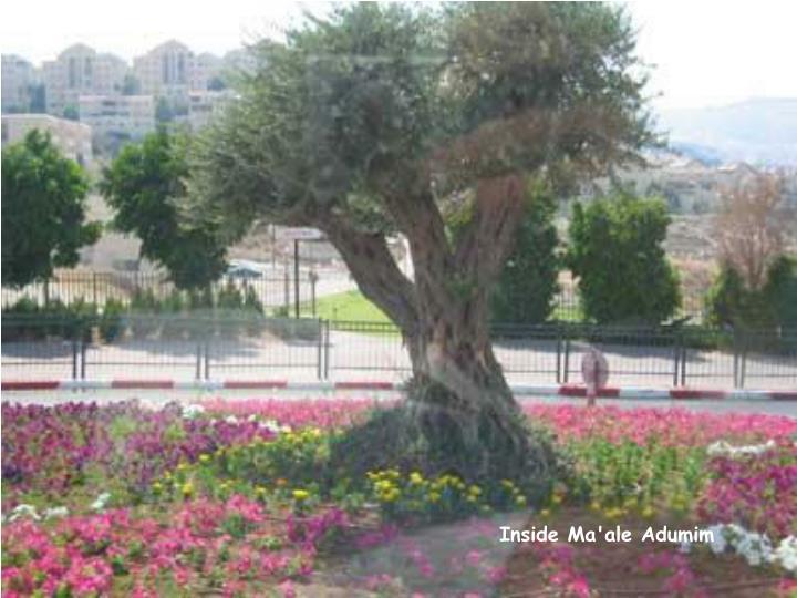 Inside Ma'ale Adumim