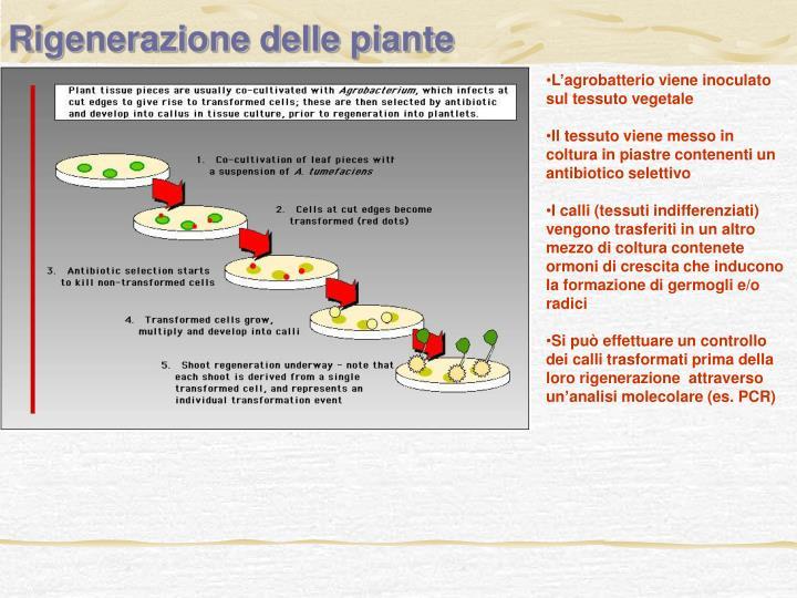 Rigenerazione delle piante