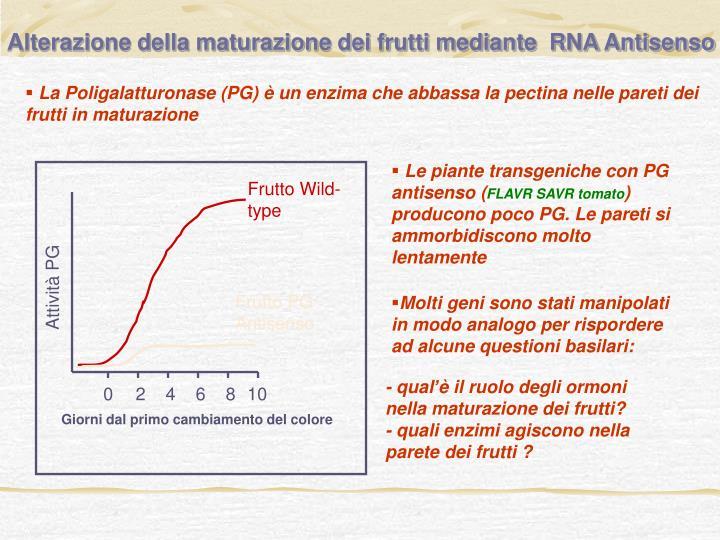 Alterazione della maturazione dei frutti mediante  RNA Antisenso