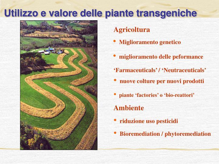 Utilizzo e valore delle piante transgeniche