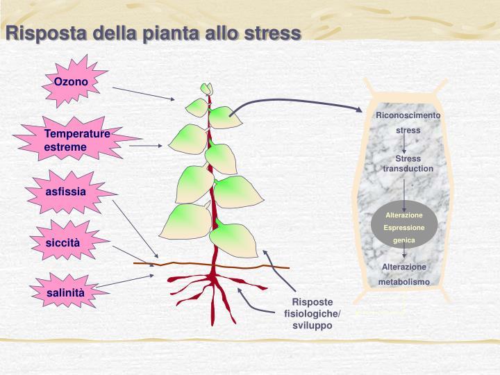 Risposta della pianta allo stress