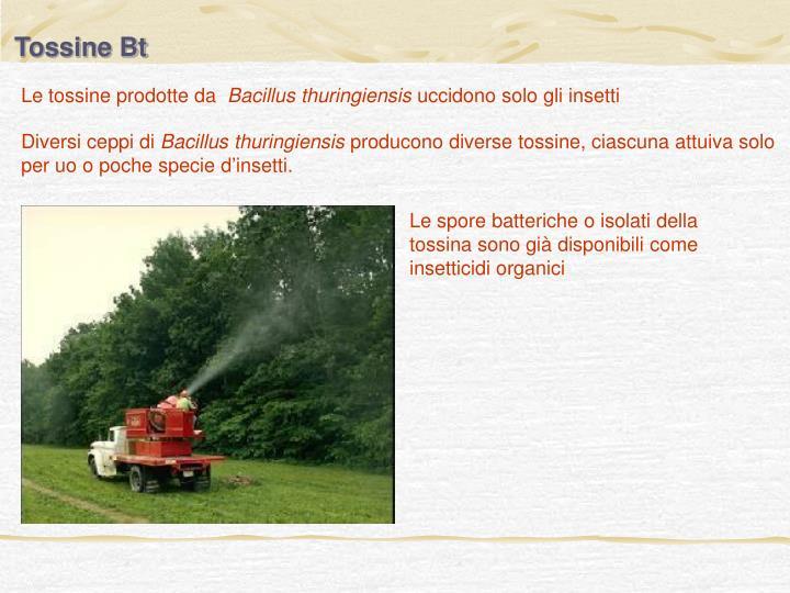 Tossine Bt