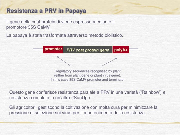 Resistenza a PRV in Papaya
