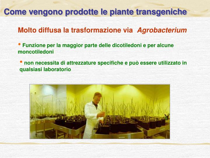 Come vengono prodotte le piante transgeniche