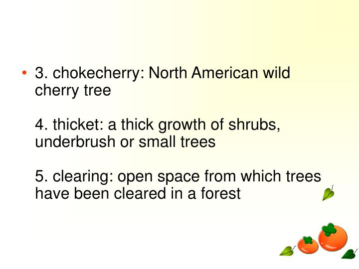 3. chokecherry: North American wild cherry tree