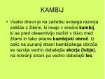 kambij