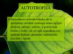 autotrofija