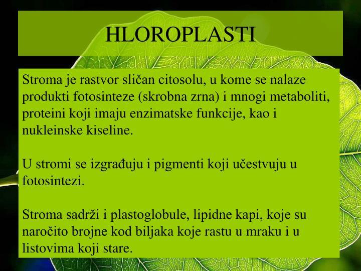HLOROPLASTI