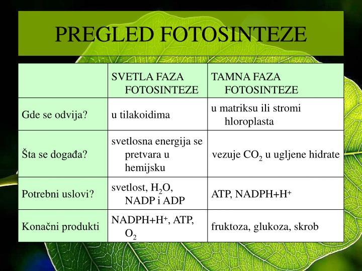 PREGLED FOTOSINTEZE