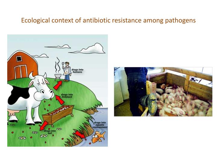 Ecological context of antibiotic resistance among pathogens