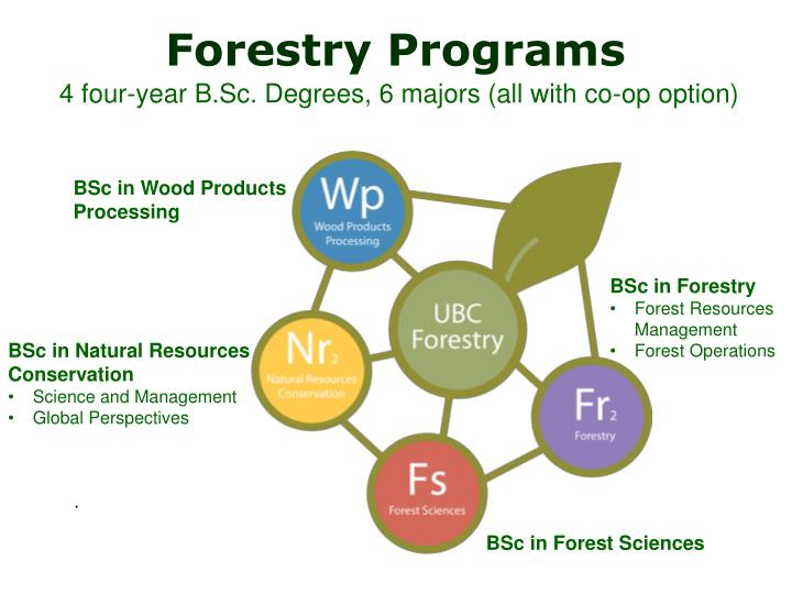 Forestry programs 4 four year b sc degrees 6 majors all with co op option