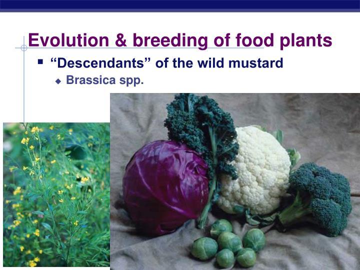 Evolution & breeding of food plants