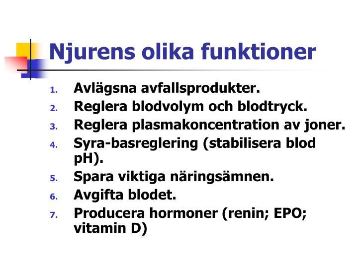 Njurens olika funktioner