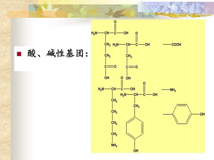 酸、碱性基团: