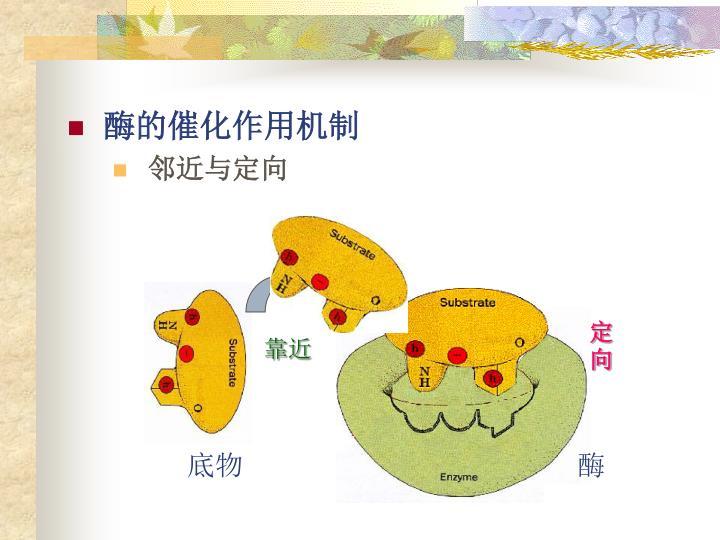 酶的催化作用机制