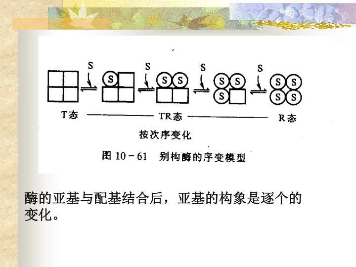 酶的亚基与配基结合后,亚基的构象是逐个的变化。
