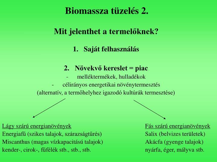 Biomassza tüzelés 2.