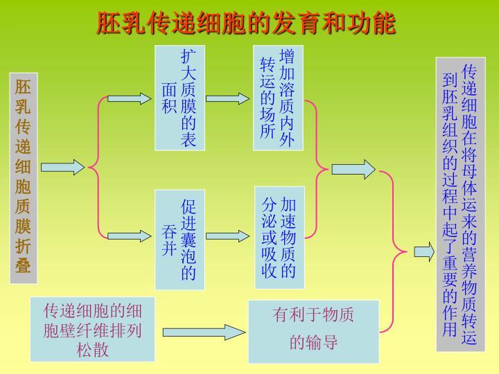 胚乳传递细胞的发育和功能