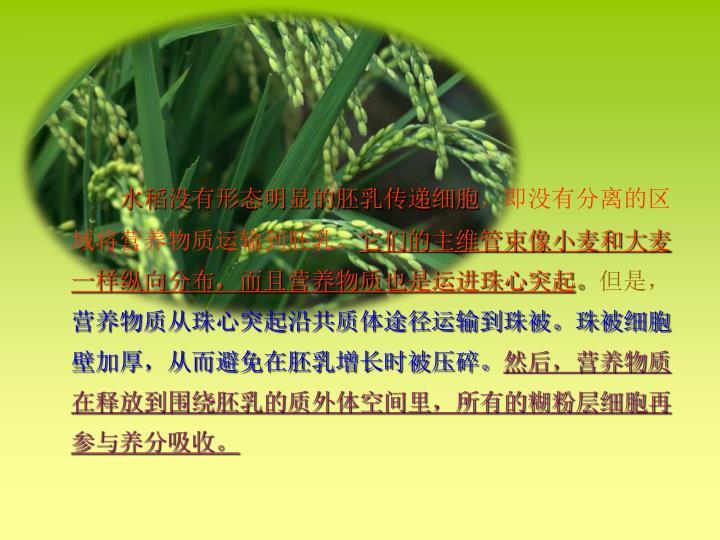 水稻没有形态明显的胚乳传递细胞