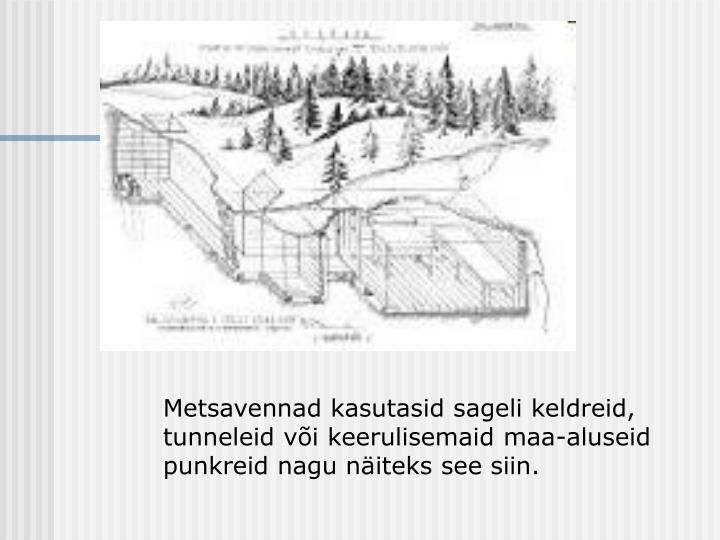 Metsavennad kasutasid sageli keldreid, tunneleid või keerulisemaid maa-aluseid punkreid nagu näiteks see siin