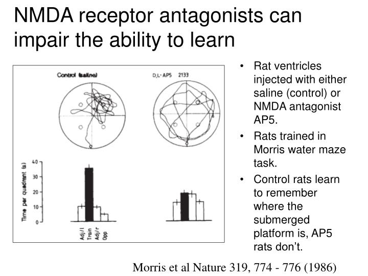 NMDA receptor antagonists can impair the ability to learn