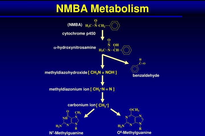 NMBA Metabolism