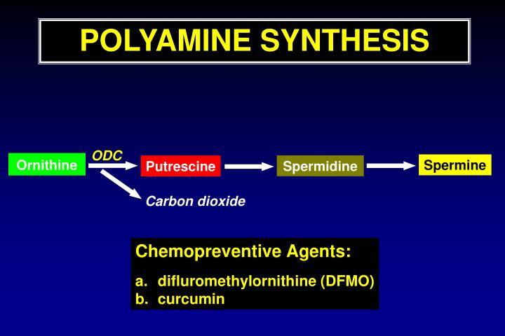 POLYAMINE SYNTHESIS