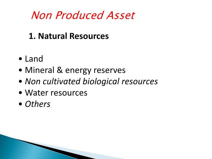 Non Produced Asset