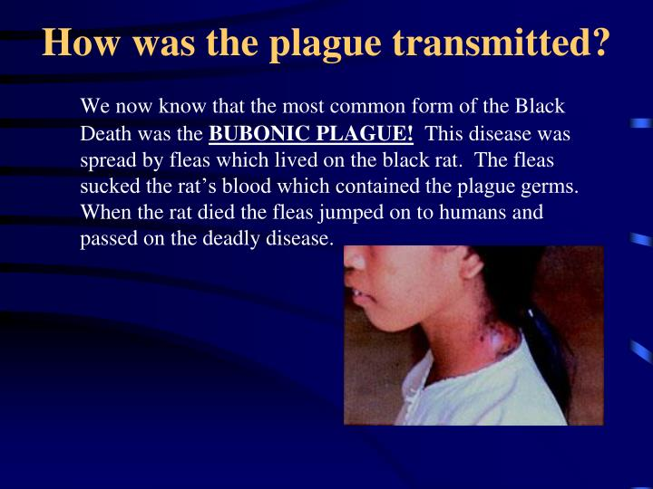 How was the plague transmitted?