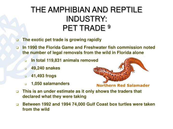 THE AMPHIBIAN AND REPTILE INDUSTRY: