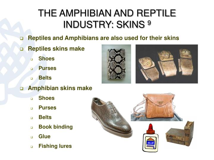 THE AMPHIBIAN AND REPTILE INDUSTRY: SKINS