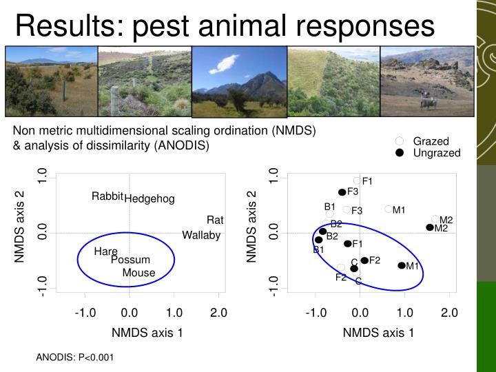 Results: pest animal responses
