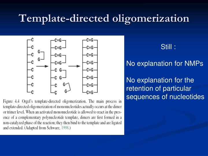 Template-directed oligomerization