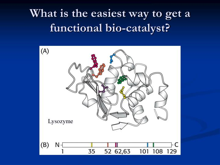 What is the easiest way to get a functional bio-catalyst?