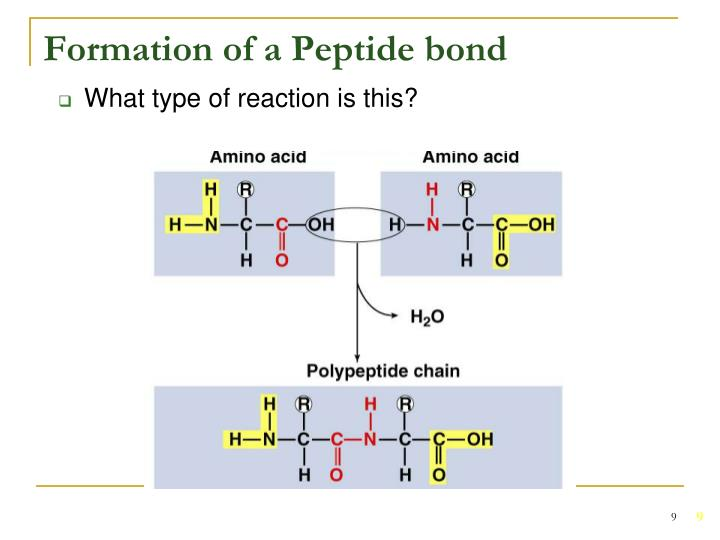 Formation of a Peptide bond