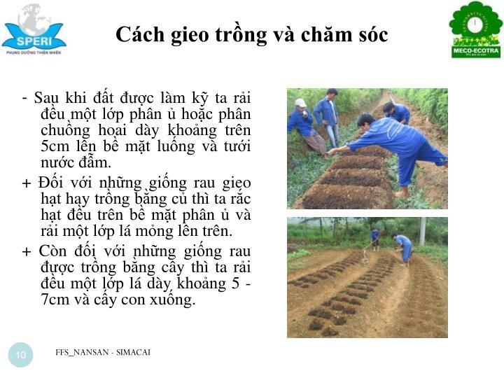 Cách gieo trồng và chăm sóc