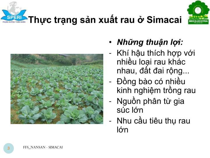 Thực trạng sản xuất rau ở Simacai