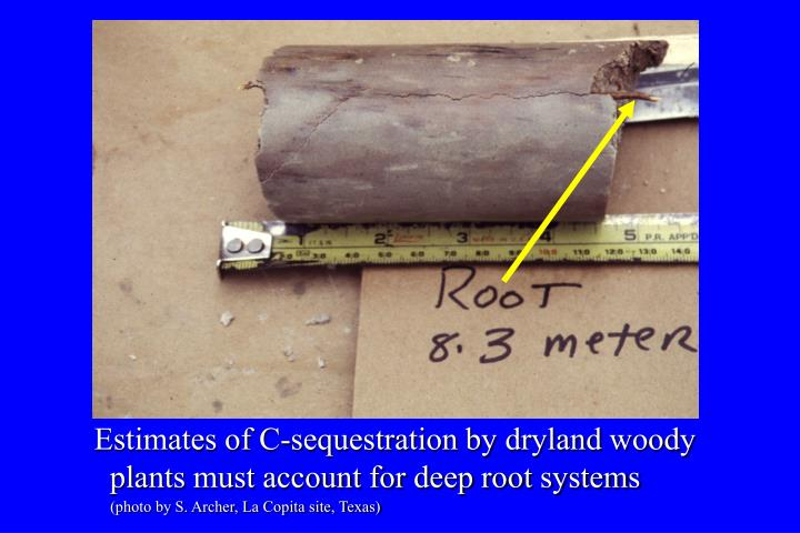 Estimates of C-sequestration by dryland woody