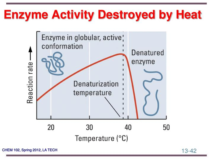 Enzyme Activity Destroyed by Heat