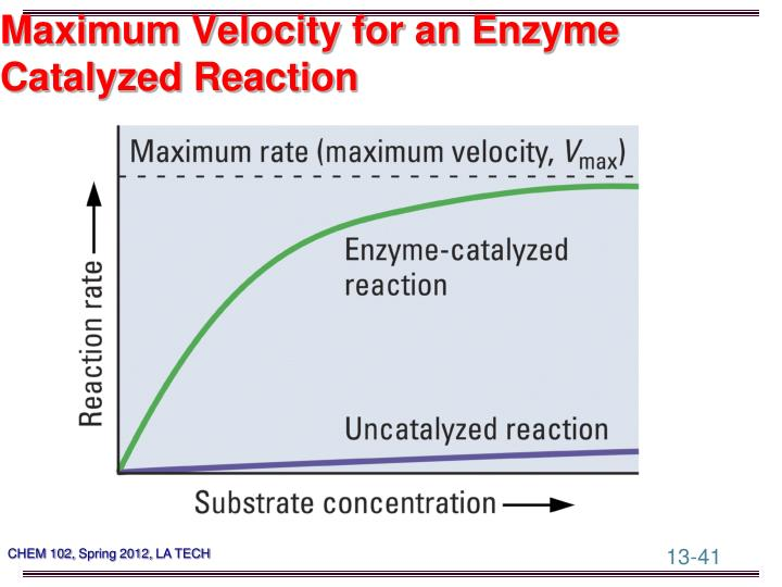 Maximum Velocity for an Enzyme
