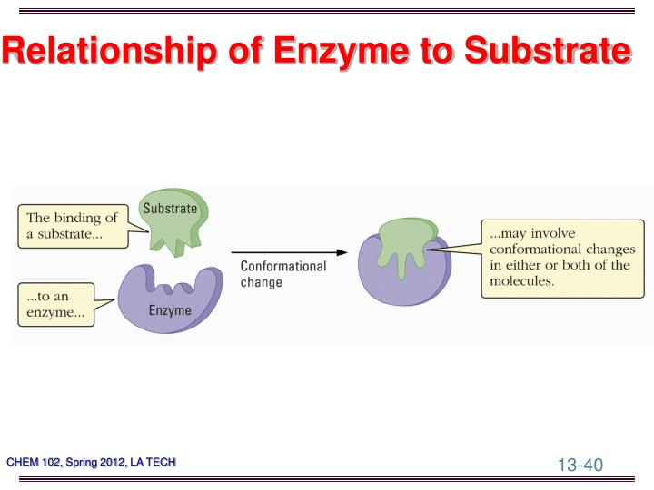 Relationship of Enzyme to Substrate
