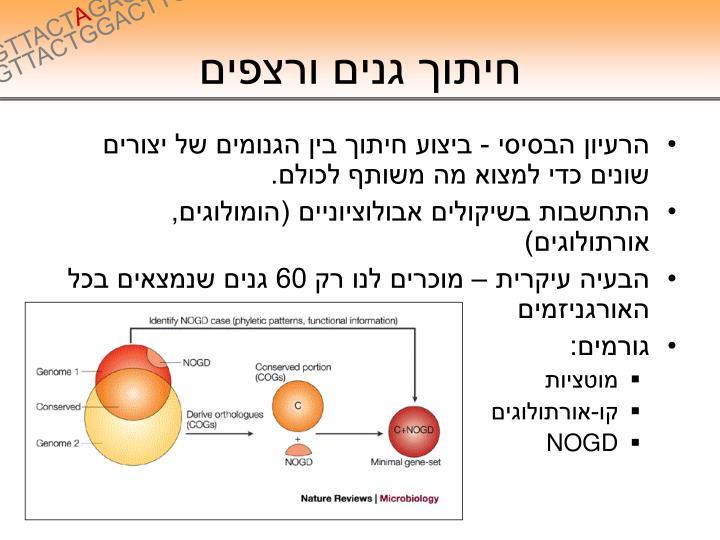 חיתוך גנים ורצפים