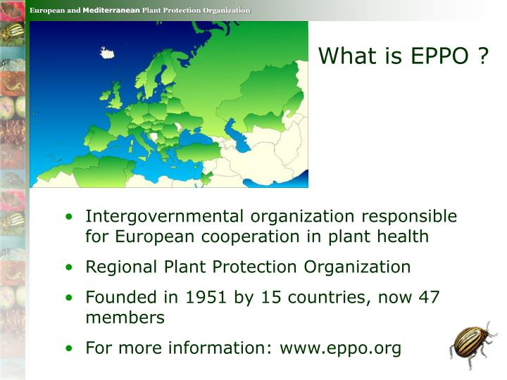 What is EPPO ?