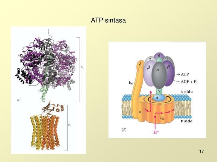 ATP sintasa