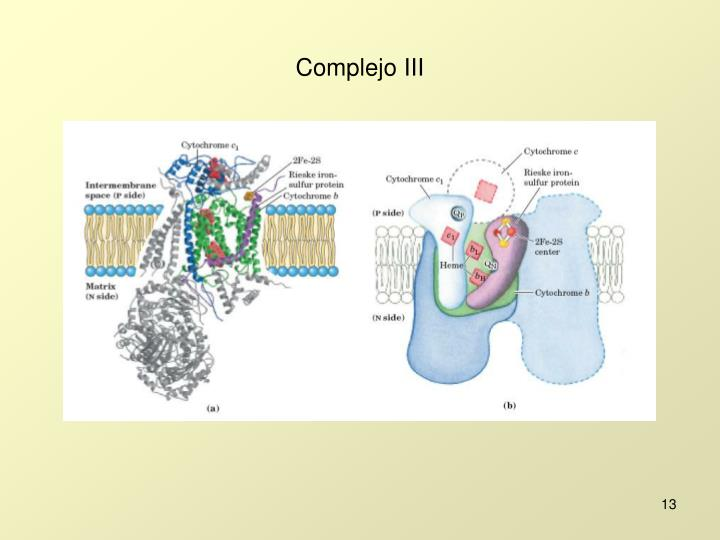 Complejo III