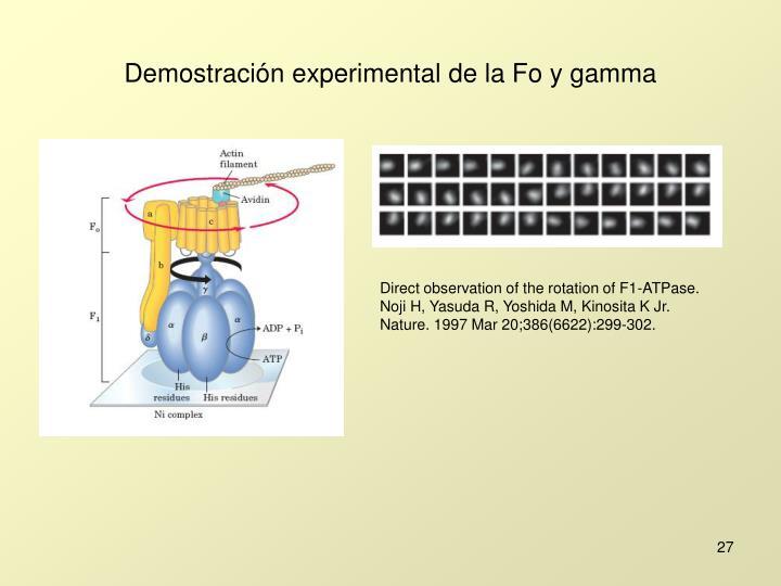 Demostración experimental de la Fo y gamma
